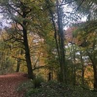 woodlands 1 fb